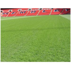 Σπόρος Γκαζόν Αντοχής Wembley