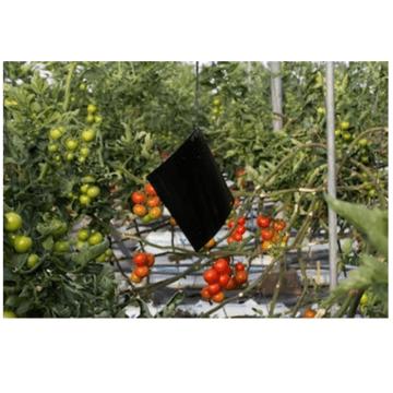 G-TRAP Χρωμοτροπικές μαύρες – παγίδες εντόμων 40 x 23cm 2