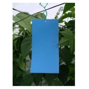 G-TRAP χρωμοπαγίδα μπλε 40×23 cm.(έτοιμες με κόλλα) 2